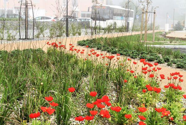 Den lille parken er frodig og grønn med bytrær, skjermende buskplantinger og blomstrende stauder. Foto: Asplan Viak