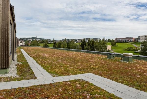 Skoleanlegget ivaretar overvannshåndtering ved grønne tak, infiltrasjonsfelt, fordrøyning og regnbed. Foto: FutureBuilt v/Tove Lauluten