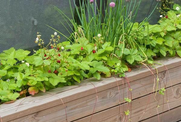 Plantekasser, markjordbær og gressløk. Foto: Kristina B. Holmblad