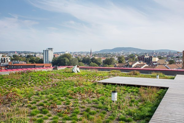 Asplan Viak planlegger grønne byer. Her fra det blågrønne taket som tar unna overvann på Vega scene i Oslo. Foto: Asplan Viak